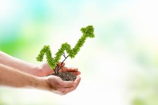 Image of human hands holding plant shaped like arrow.jpeg